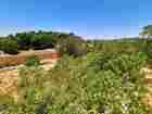 3 دونم زراعي للبيع في عبين عجلون بسعر منخفض