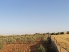 مزرعة للبيع في مادابا