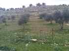 ارض زراعية للبيع منطقة السليحي