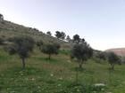 ارض للبيع منطقة السليحي طريق جرش