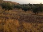 ارض للبيع في عمان الغربيه