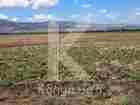 أرض زراعي للبيع في السلط