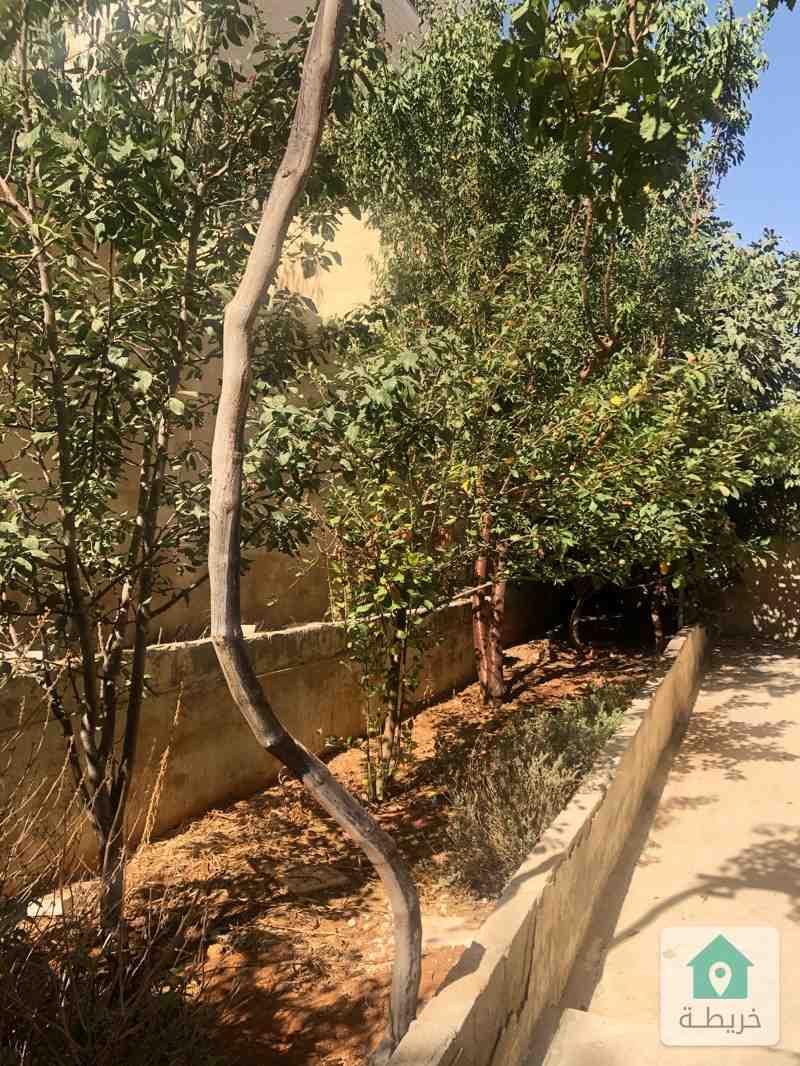 عمان شفا بدران بجانب جامعة العلوم التطبيقية