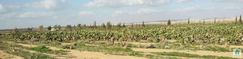 مزرعة جنوب عمان منطقة البريك-حمام الشموط المساحة 189 دونم و109م 3400 شجرة زيتون مثمر