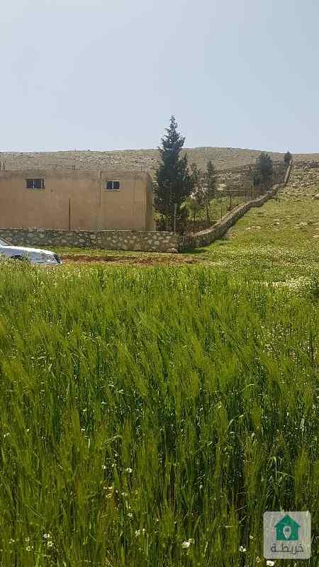 مزرعة للبيع في صروت صروت بلدية بيرين حوض حدد