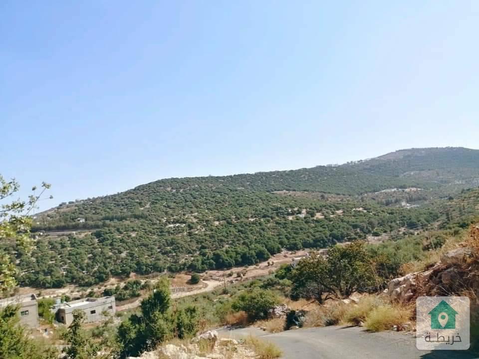 مزرعة قوشان مستقل مساحة 5.5 دونوم للبيع مزروعة باشجار الزيتون في السلط