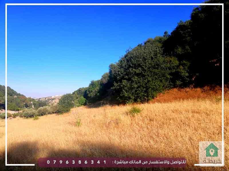 منطقة السلط الزعتري داخل حدود البلدية تبعد عن منطقة السرو خمسة كيلو متر مربع