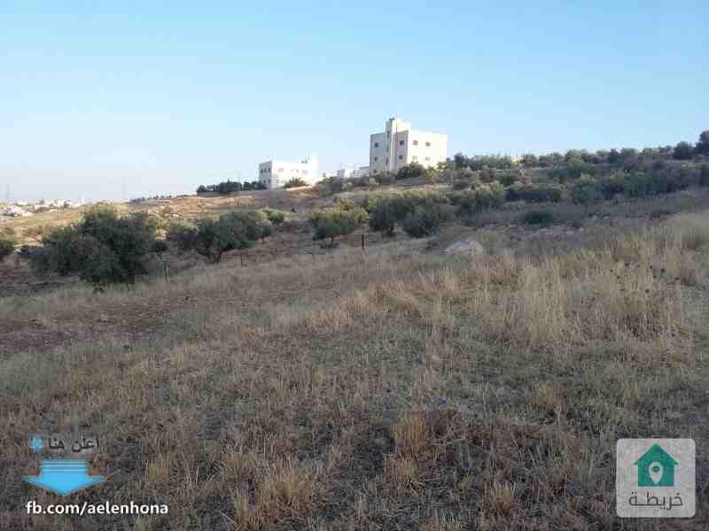 ارض للبيع في المستندة/ حي القاضي - قرب مسجد الحاج فلاح فضيلة الحنيطي