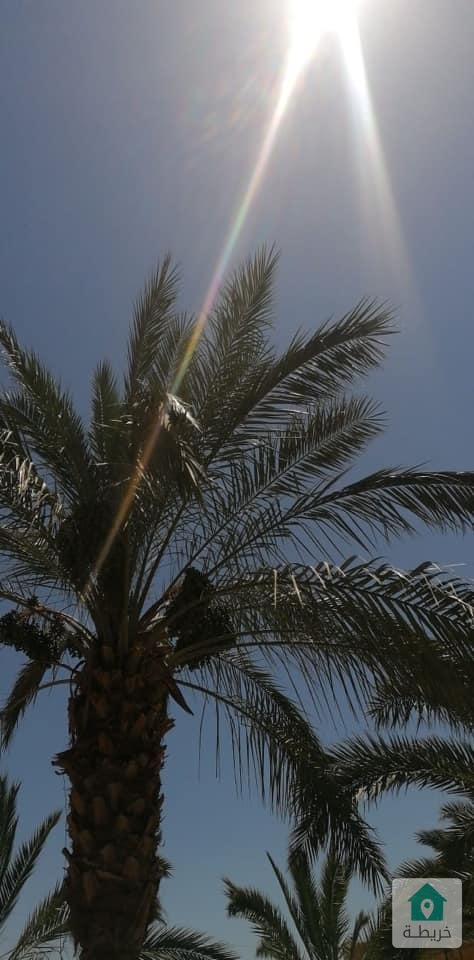 مزرعة للبيع في منطقة البحر الميت /الجوفة