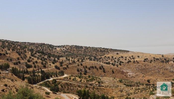 ارض في بدر الجديده 12 دونم للبيع