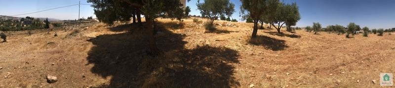 ارض للبيع في ناعور العال والروضة حوض ابو الغزلان ٧٥٠ م