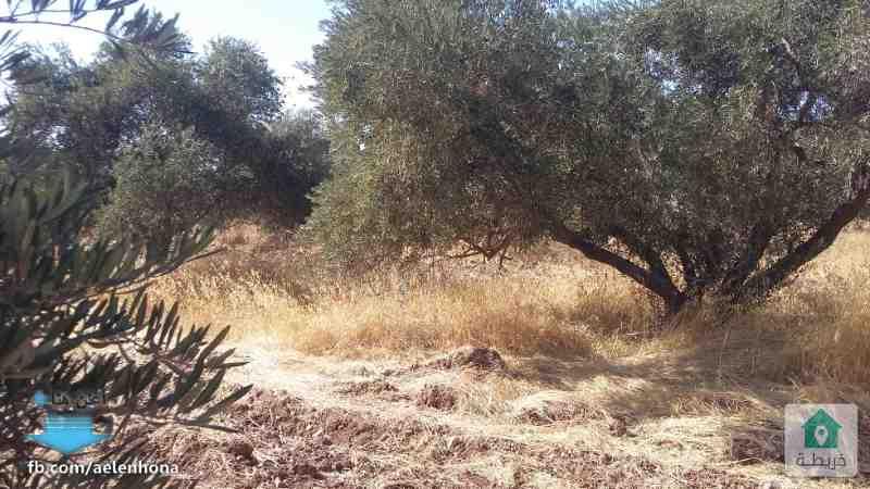 ارض للبيع في الجويدة/ حي الباير - خلف مدارس باب الريان