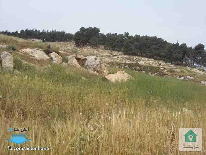 ارض للبيع في مرج الحمام/ نزول ناعور - قرب مصنع مالك