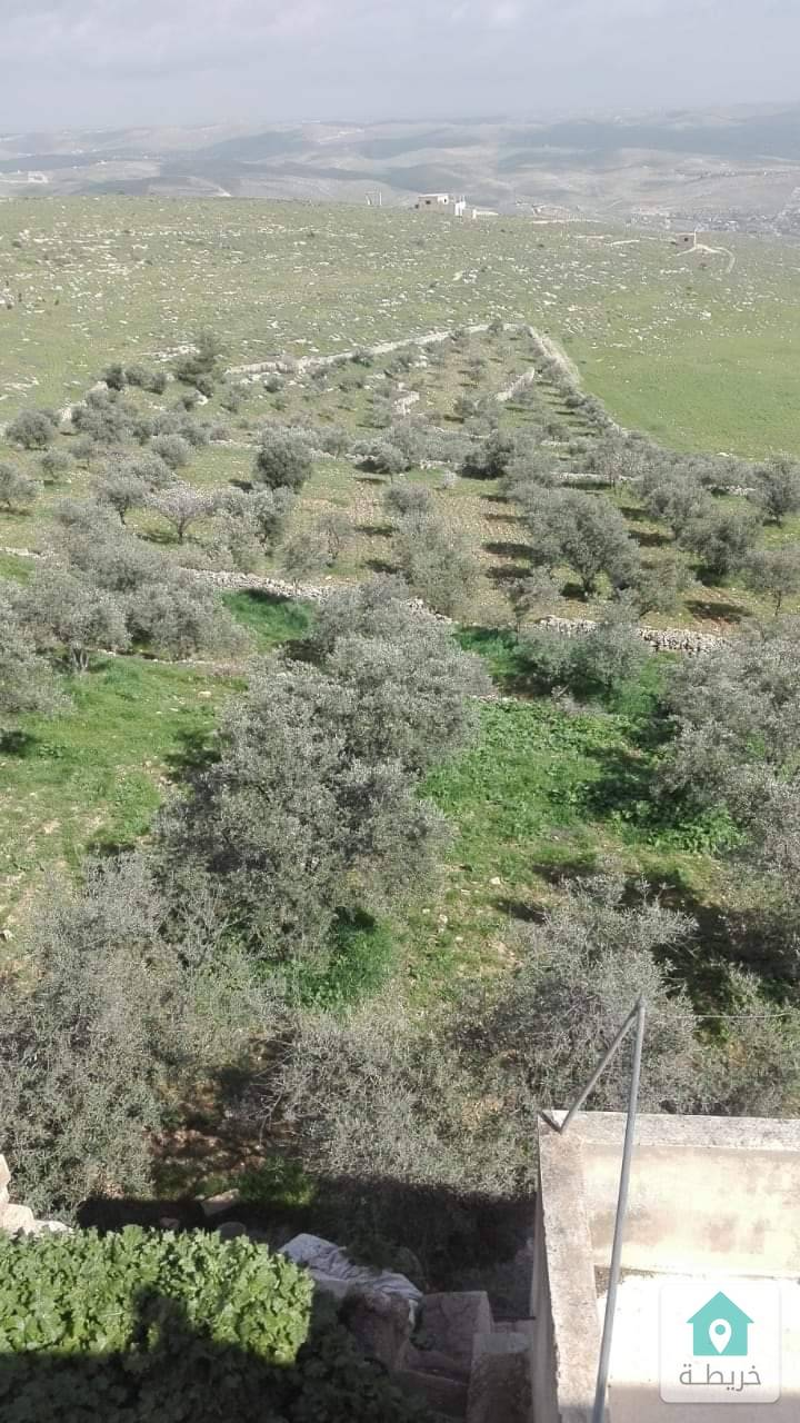 مزرعة للبيع المستعجل مساحة ١١دنم جرش