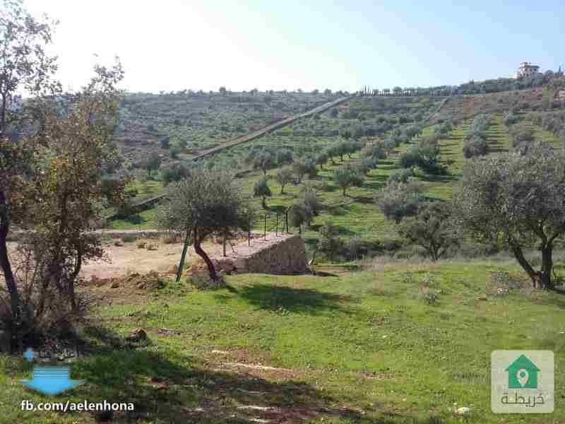 ارض للبيع في المجدل  تبعد 880م عن مسجد عمار بن ياسر