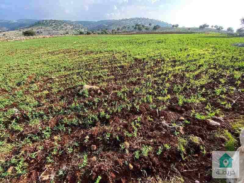 قطعة أرض 200 دونم من أراضي خربة الوهادنه عجلون للتأجير أو الضمان حسب الاتفاق